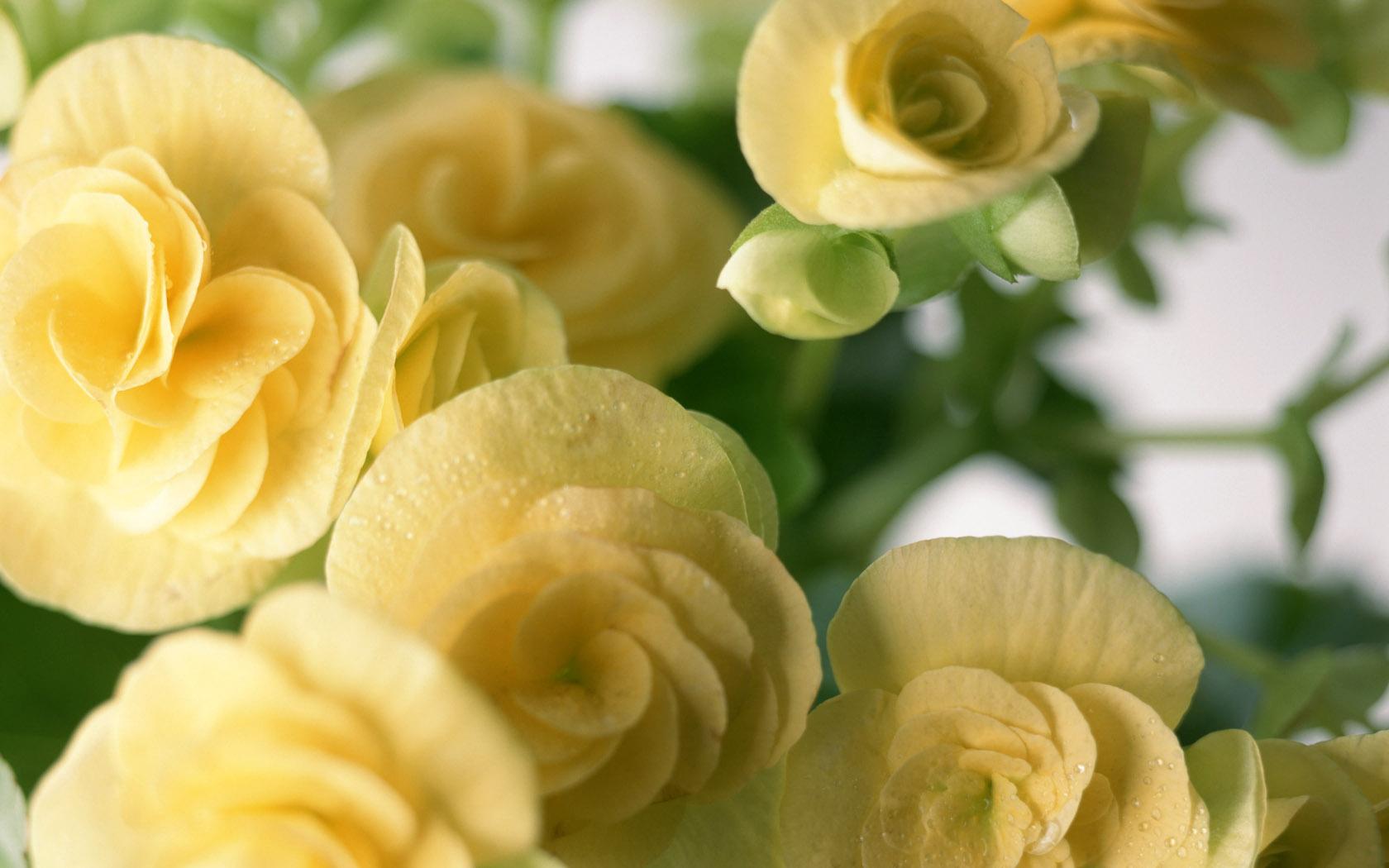 屏 鲜花锦簇 壁纸29壁纸,20寸宽屏 鲜花锦簇壁纸图片 -20寸宽屏 鲜