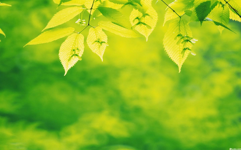 清新绿叶摄影超大屏高清桌面壁纸高清图片