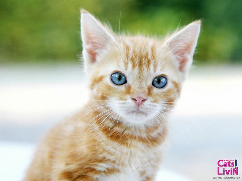 可爱猫咪壁纸图片下载