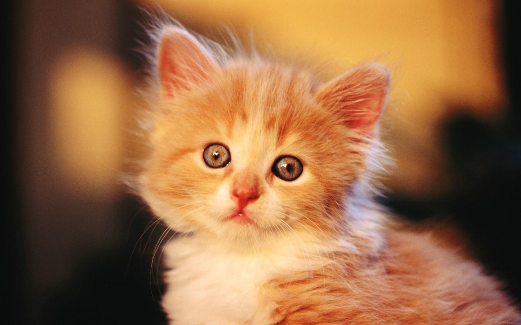 的可爱小猫咪宽屏壁纸