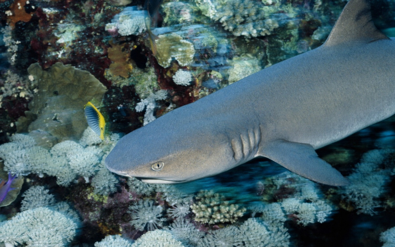 壁纸 动物 海底 海底世界 海洋馆 水族馆 鱼 鱼类 1440_900