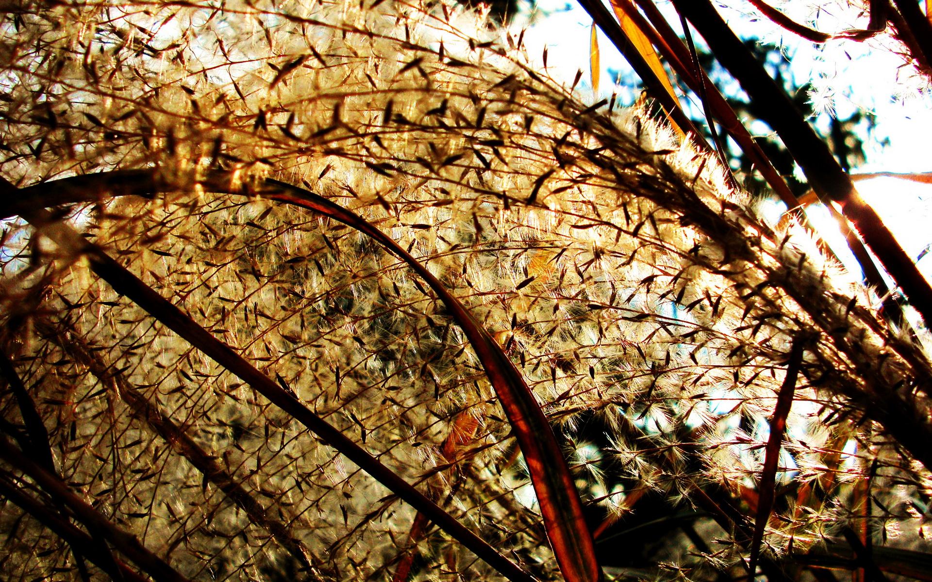 壁纸1920×1200日本随拍之游 风光风景植物宽屏壁纸 壁纸3壁纸 日本随拍之游 风光风壁纸图片风景壁纸风景图片素材桌面壁纸