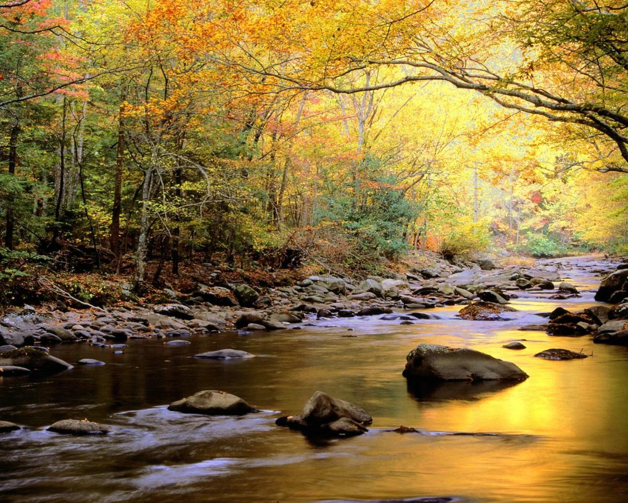 壁纸1280×1024溪流 河流壁纸 壁纸5壁纸 溪流 河流壁纸