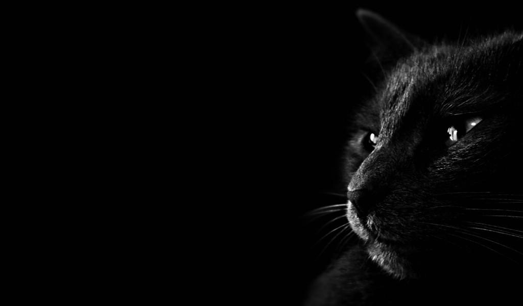 俺妹黑猫桌面壁纸