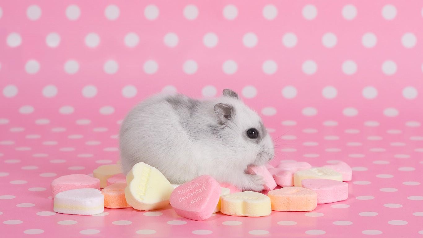 壁纸1366×768可爱小老鼠
