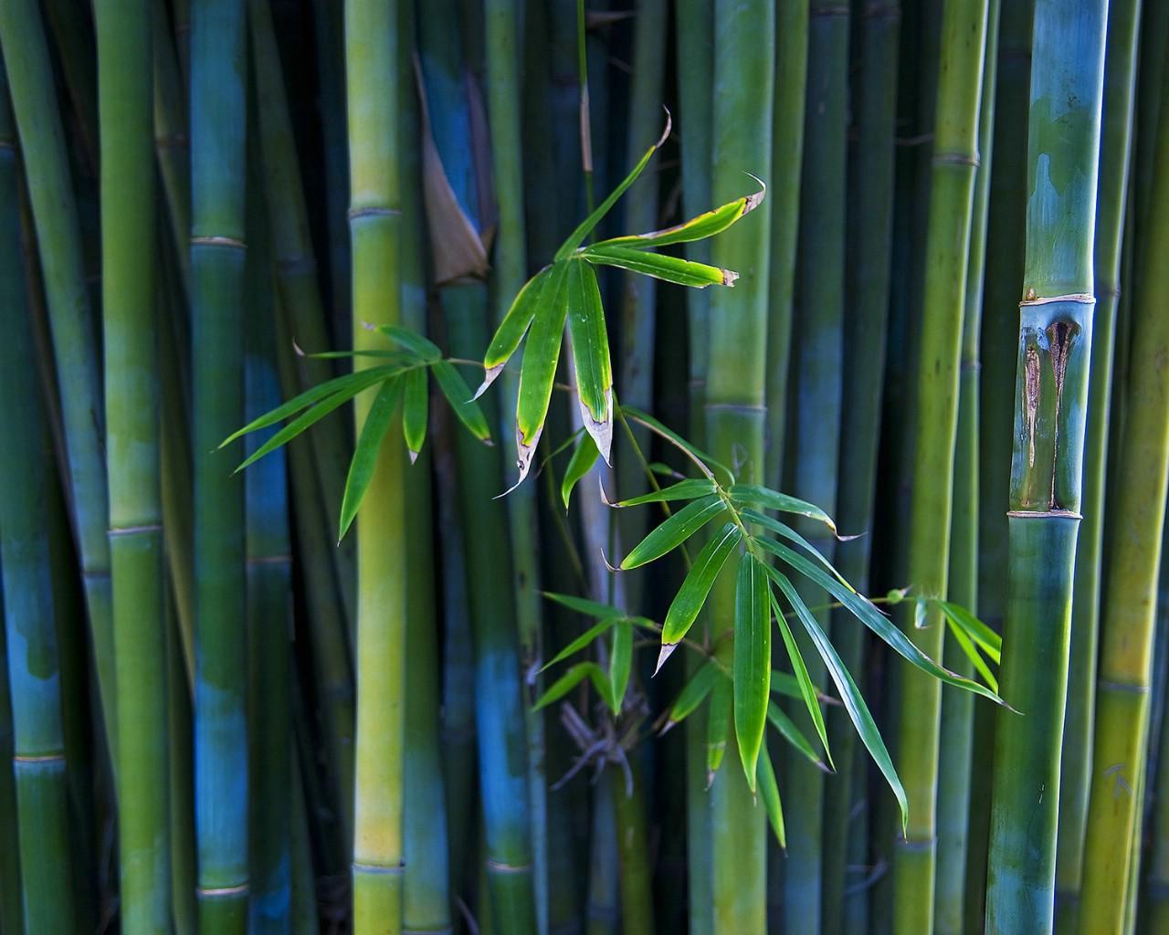 桌面竹子風景壁紙