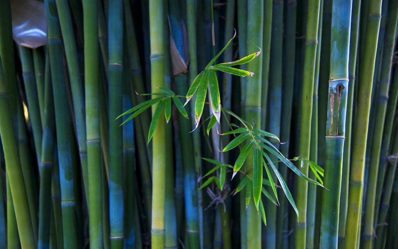 竹子移栽种植需要有机肥吗?