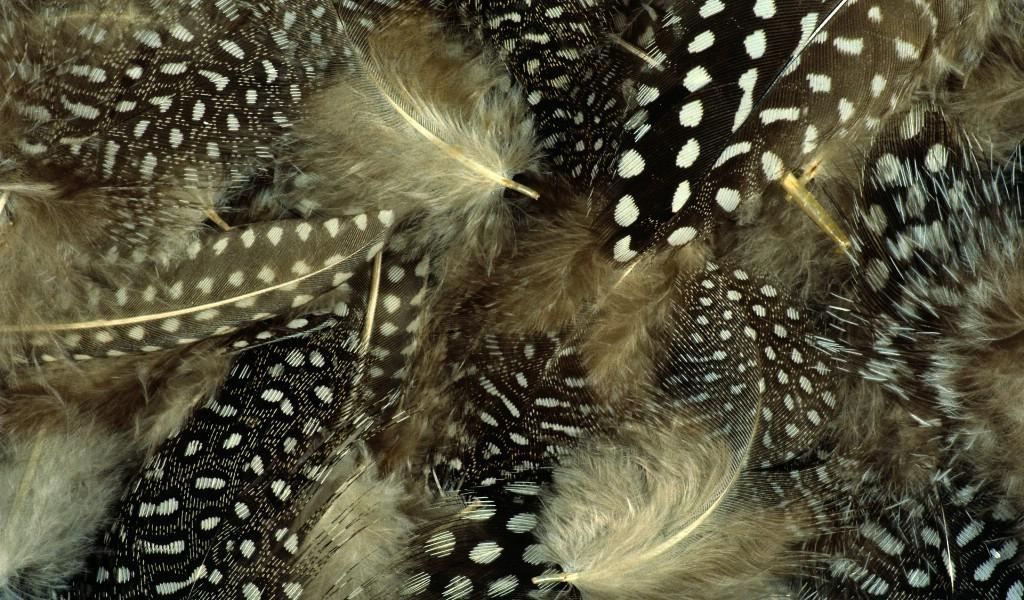 壁纸1024×600彩色羽毛和翅膀宽屏壁纸 1920x1200 壁纸6壁纸 彩色羽毛和翅膀宽屏壁壁纸图片系统壁纸系统图片素材桌面壁纸