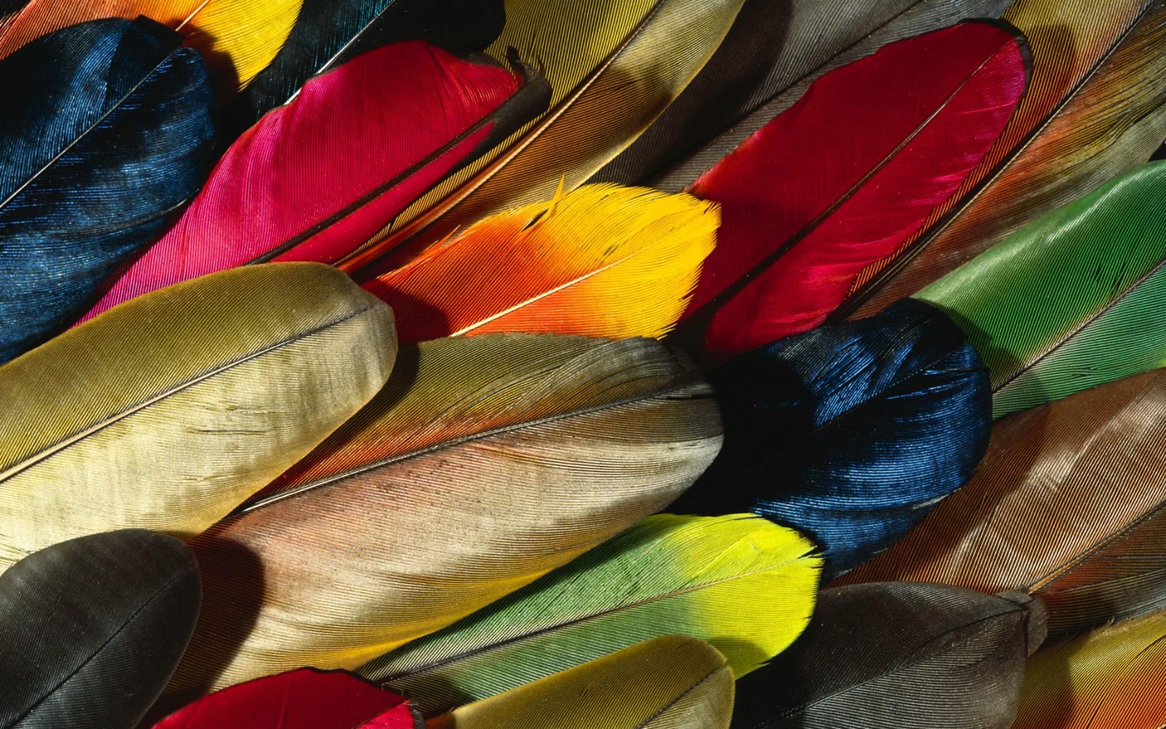 壁纸1680×1050彩色羽毛和翅膀宽屏壁纸 1920x1200 壁纸15壁纸 彩色羽毛和翅膀宽屏壁壁纸图片系统壁纸系统图片素材桌面壁纸