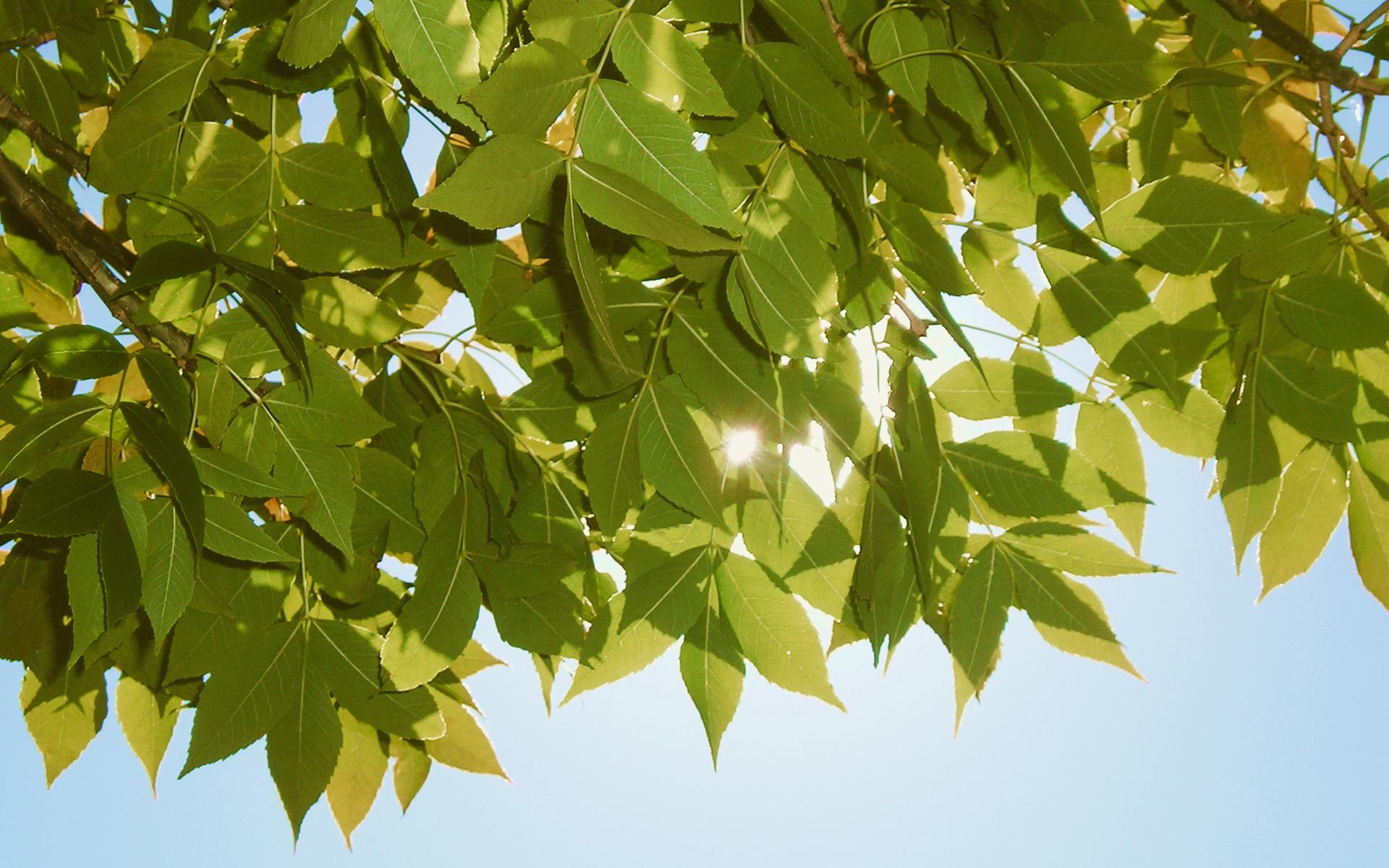 壁纸1920×1200高清宽屏植物风光摄影壁纸 2009 09 26 壁纸2壁纸 高清宽屏植物风光摄影壁纸图片系统壁纸系统图片素材桌面壁纸