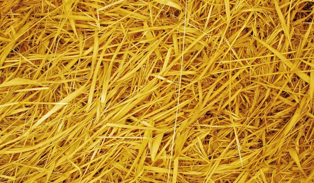 壁纸1024×600高清宽屏植物风光摄影壁纸 2009 09 26 壁纸11壁纸 高清宽屏植物风光摄影壁纸图片系统壁纸系统图片素材桌面壁纸