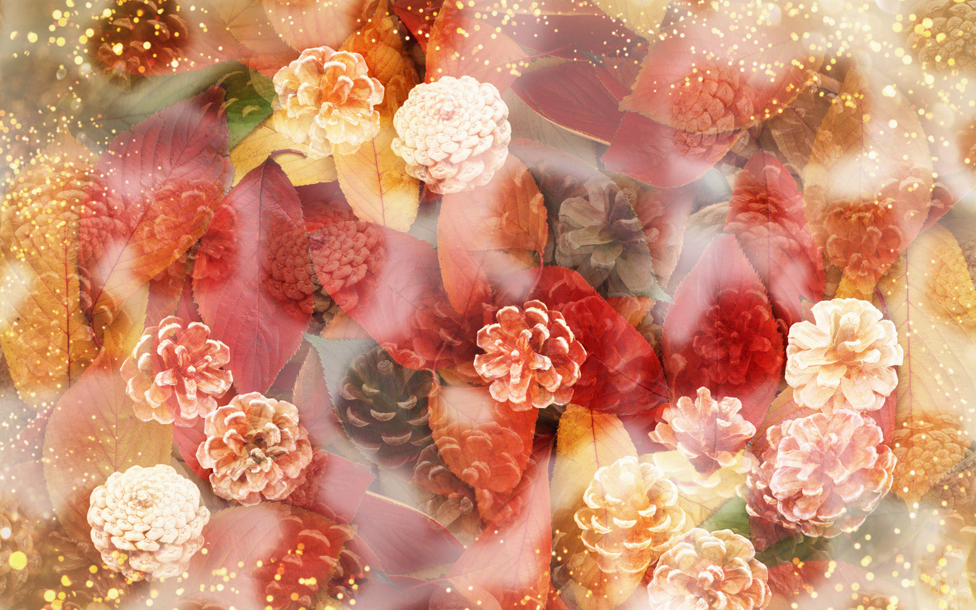 壁纸1920×1200朦胧花朵柔美 宽屏壁纸 壁纸7壁纸 朦胧花朵柔美 宽屏壁壁纸图片系统壁纸系统图片素材桌面壁纸