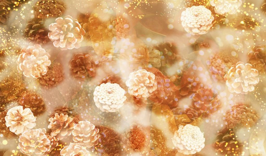 壁纸1024×600朦胧花朵柔美 宽屏壁纸 壁纸8壁纸 朦胧花朵柔美 宽屏壁壁纸图片系统壁纸系统图片素材桌面壁纸