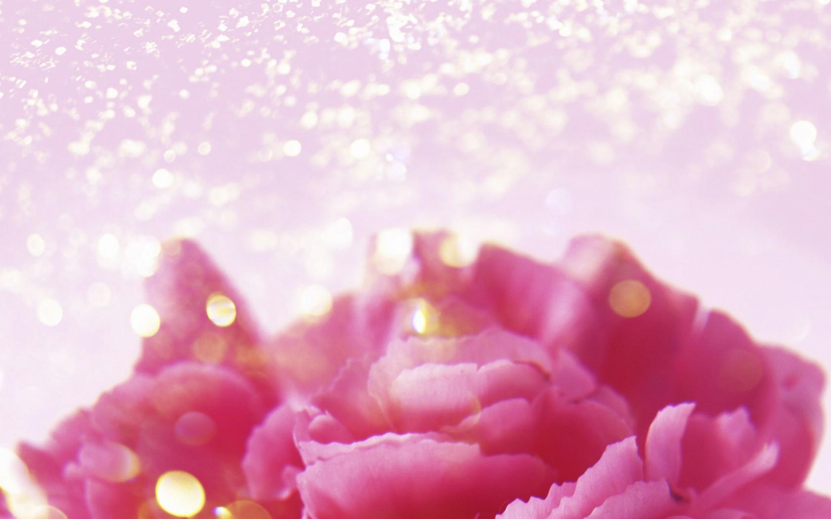 壁纸1680×1050朦胧花朵柔美 宽屏壁纸 壁纸73壁纸 朦胧花朵柔美 宽屏壁壁纸图片系统壁纸系统图片素材桌面壁纸
