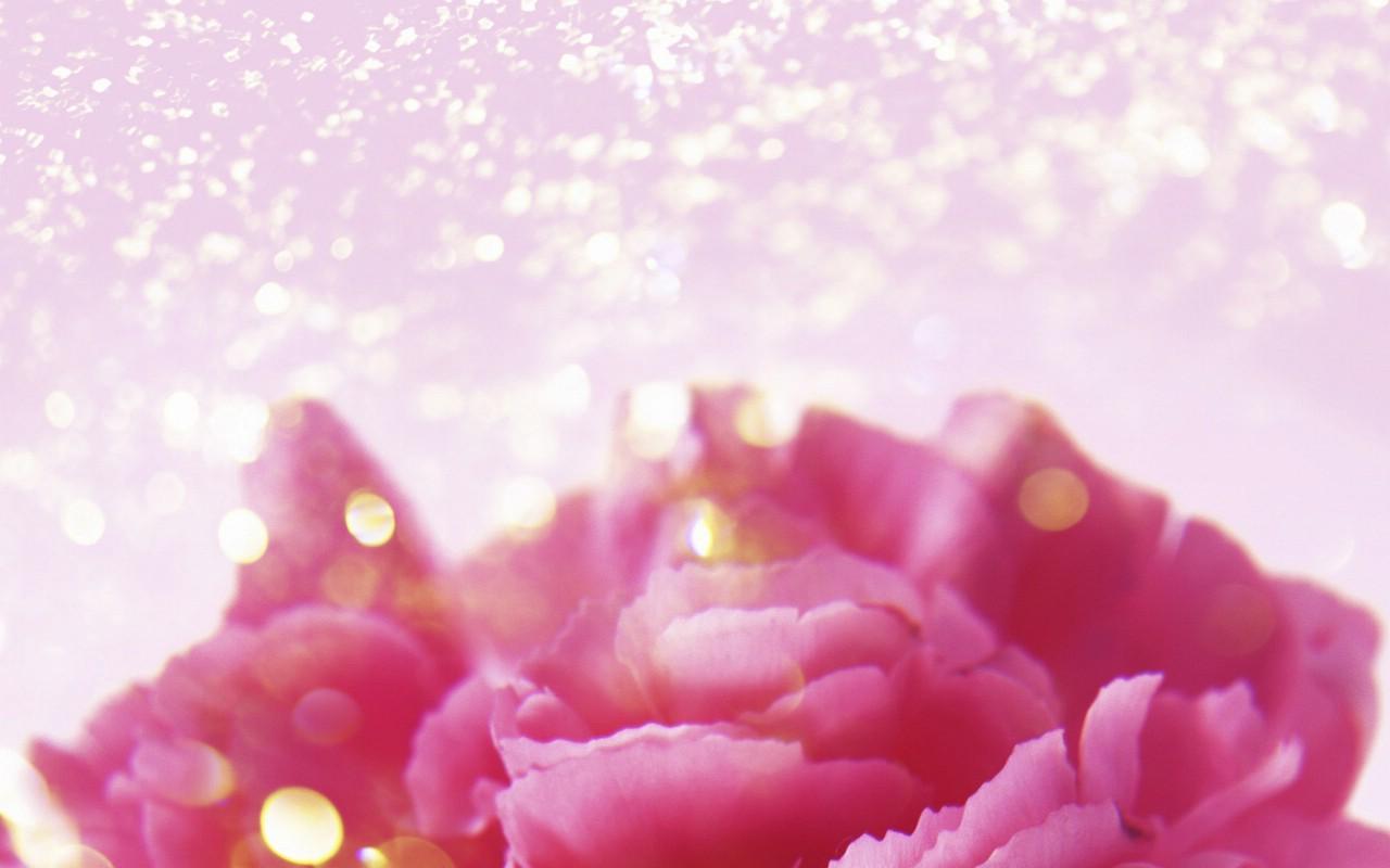 壁纸1280×800朦胧花朵柔美 宽屏壁纸 壁纸73壁纸 朦胧花朵柔美 宽屏壁壁纸图片系统壁纸系统图片素材桌面壁纸