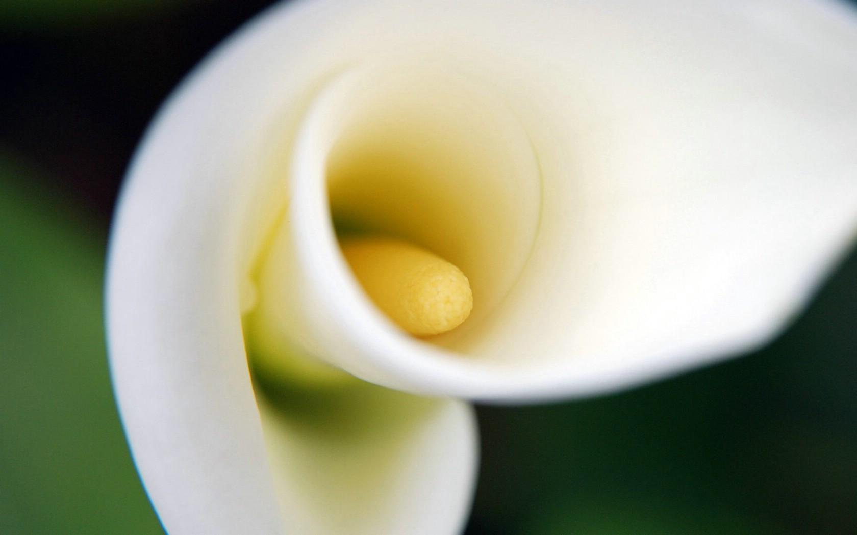 壁纸1680×1050朦胧花朵柔美 宽屏壁纸 壁纸97壁纸 朦胧花朵柔美 宽屏壁壁纸图片系统壁纸系统图片素材桌面壁纸