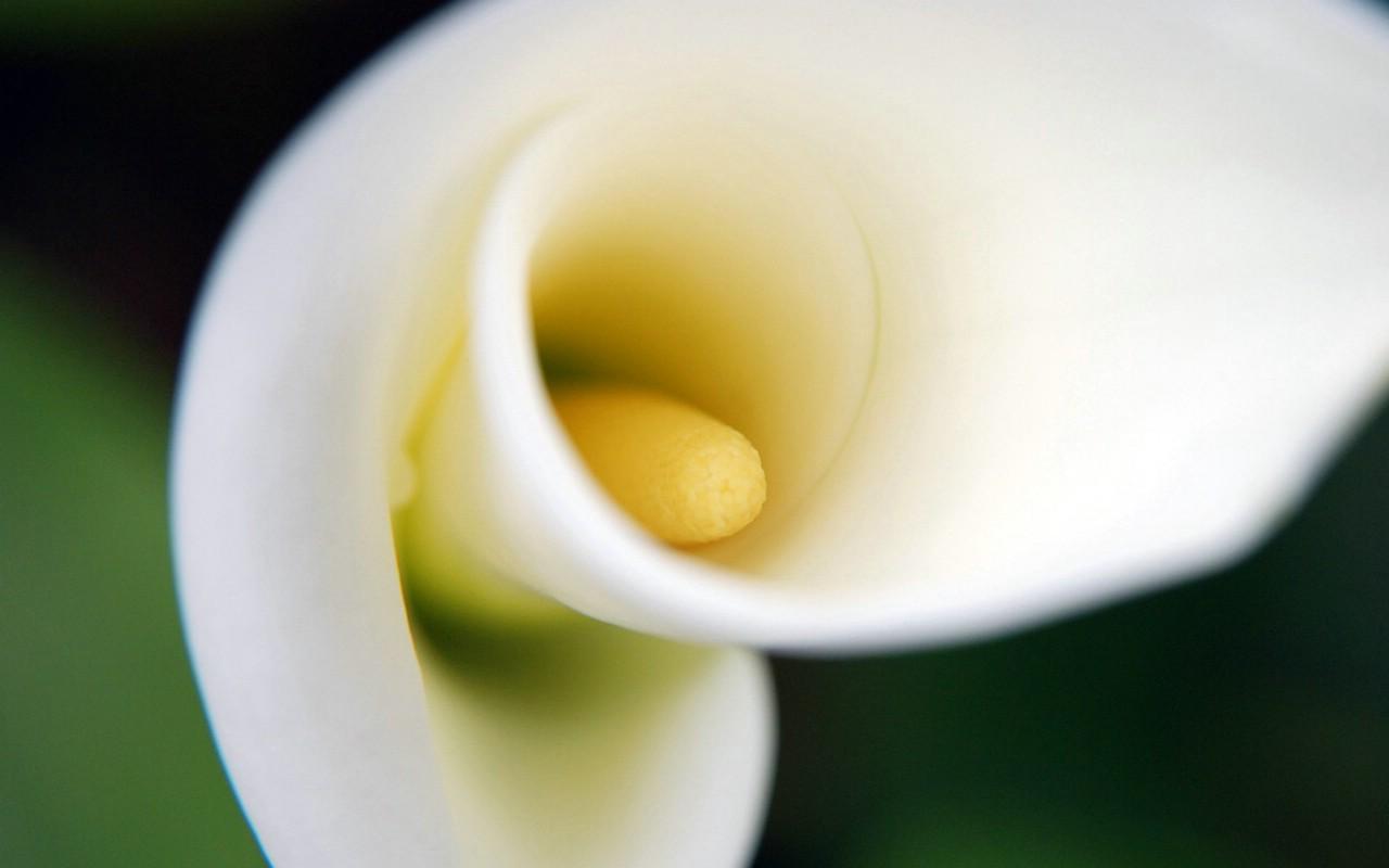 壁纸1280×800朦胧花朵柔美 宽屏壁纸 壁纸97壁纸 朦胧花朵柔美 宽屏壁壁纸图片系统壁纸系统图片素材桌面壁纸