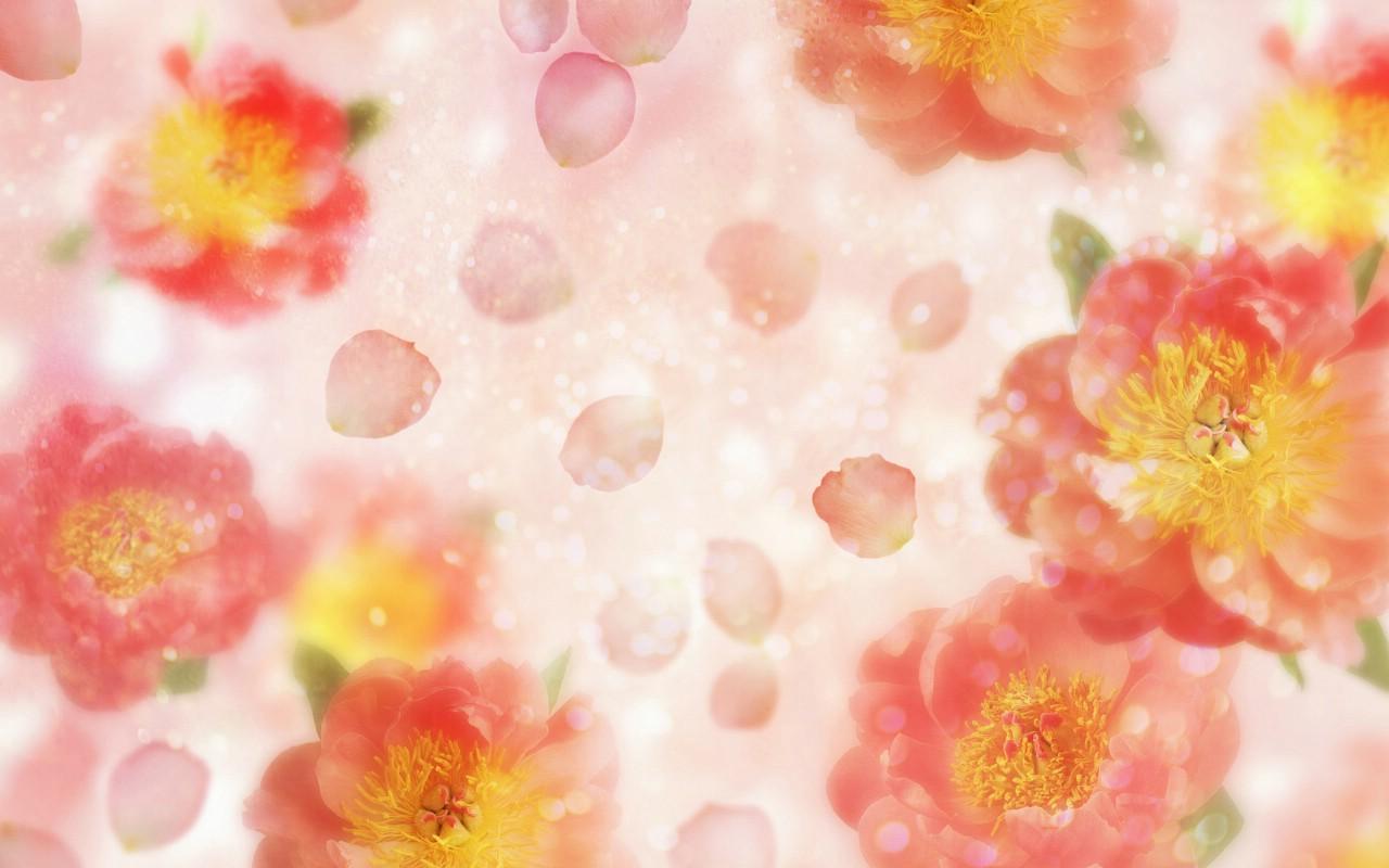 壁纸1280×800朦胧花朵柔美 宽屏壁纸 壁纸50壁纸 朦胧花朵柔美 宽屏壁壁纸图片系统壁纸系统图片素材桌面壁纸