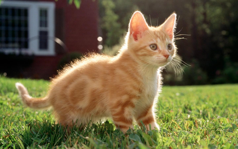 可爱猫咪的真实照片