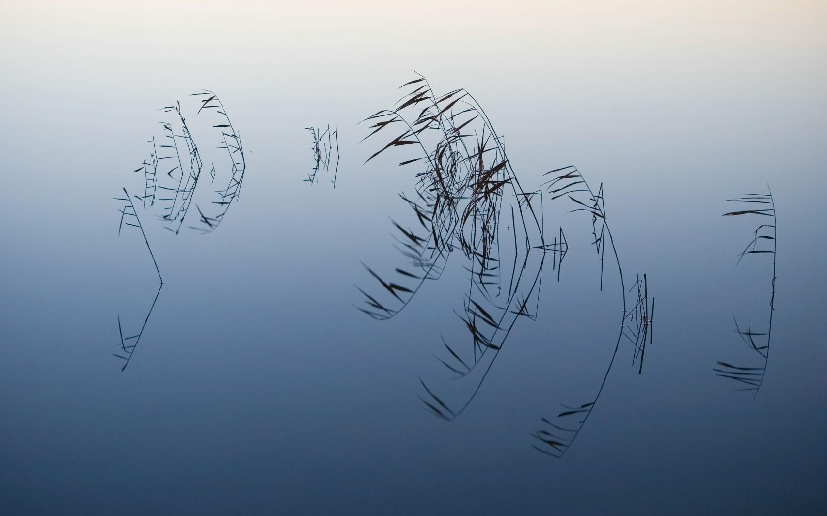 壁纸1680×1050苹果2009最新系统 Snow Leopard 雪豹 全套官方宽屏壁纸 2560 1600 壁纸16壁纸 苹果2009最新系统壁纸图片系统壁纸系统图片素材桌面壁纸