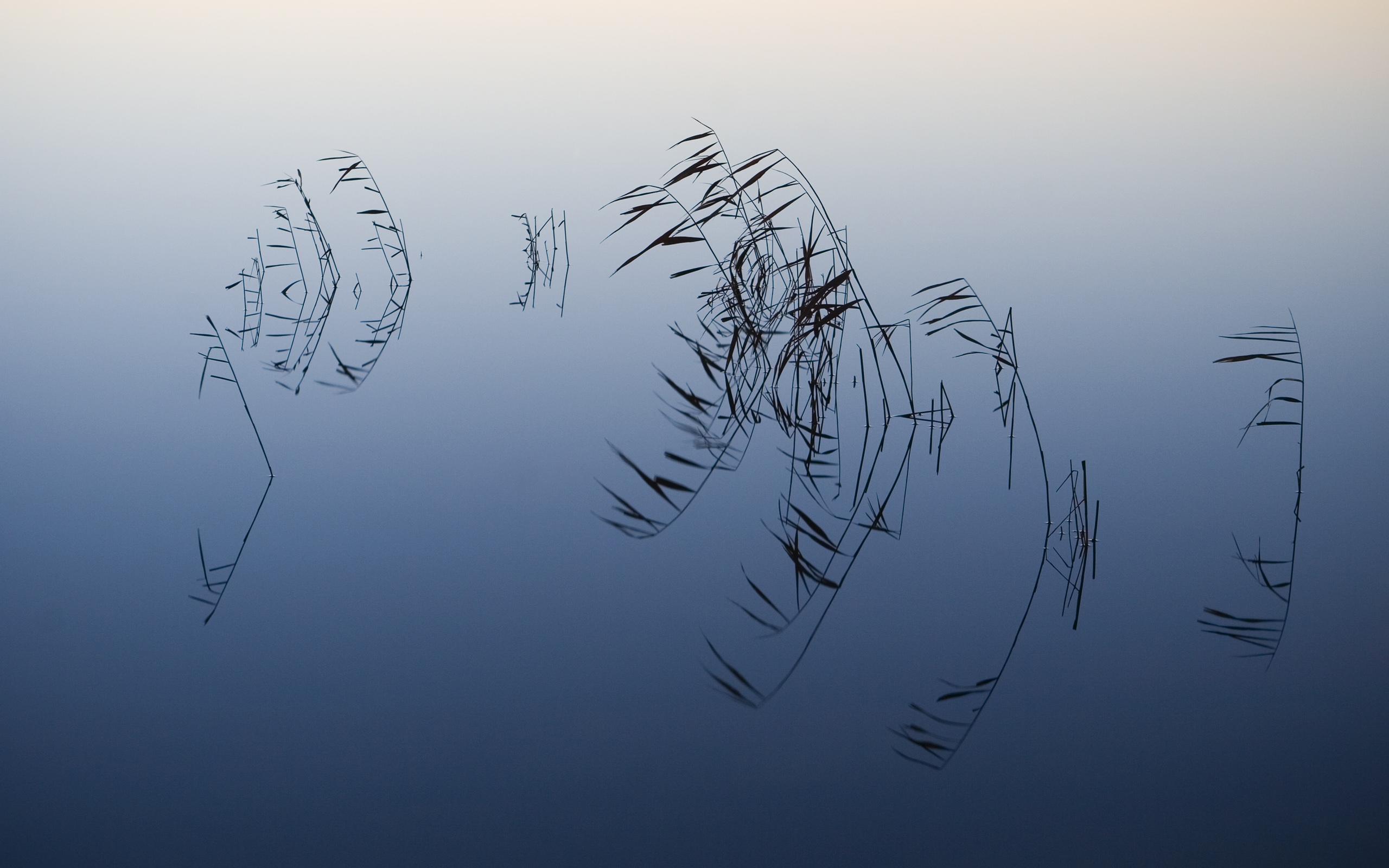 壁纸2560×1600苹果2009最新系统 Snow Leopard 雪豹 全套官方宽屏壁纸 2560 1600 壁纸16壁纸 苹果2009最新系统壁纸图片系统壁纸系统图片素材桌面壁纸