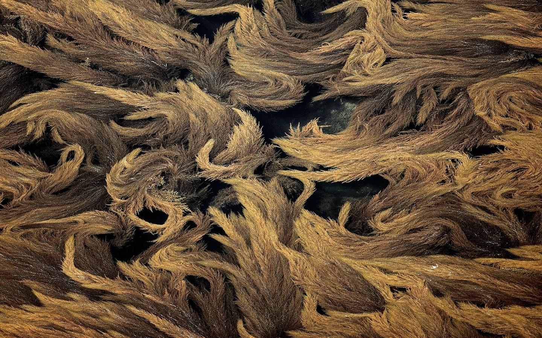 壁纸1440×900上帝之眼 扬恩 亚瑟 Yann Arthus Bertrand 空中摄影奇景壁纸法国篇 壁纸12壁纸 上帝之眼:扬恩・亚瑟壁纸图片系统壁纸系统图片素材桌面壁纸