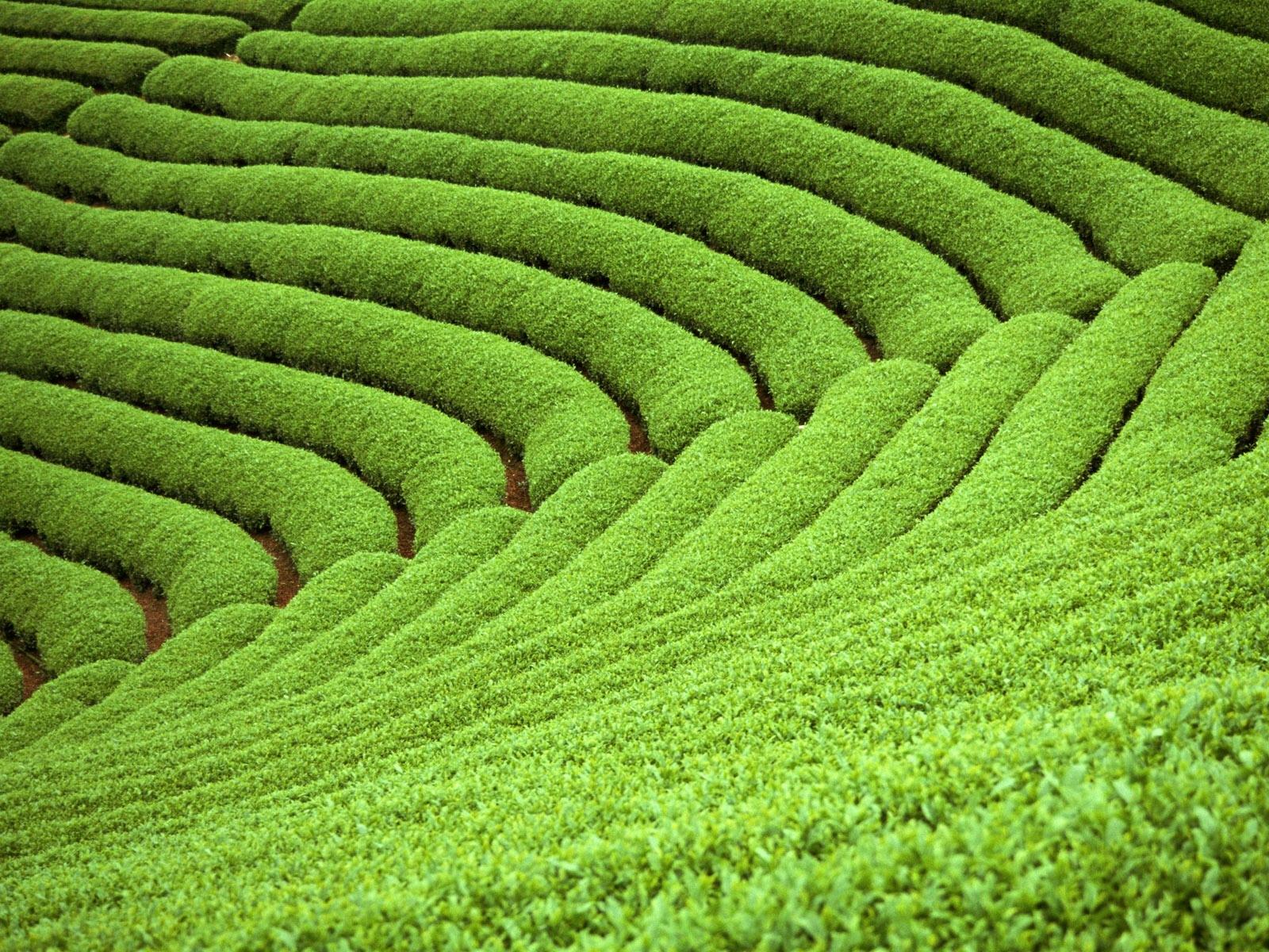 壁纸1600×1200草原田园植物绿色高清壁纸壁