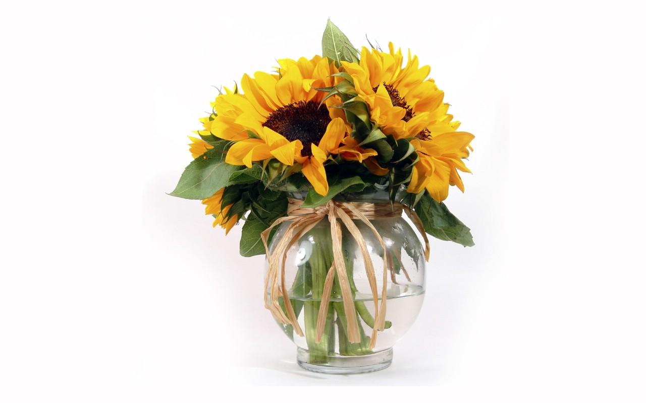 银杏立面 植物素材展示
