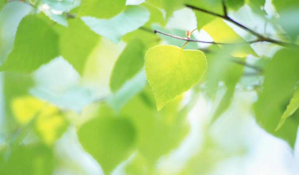 壁纸1024×600夏日气息 阳光水滴 清新绿叶高清壁纸 壁纸17壁纸 夏日气息:阳光水滴 壁纸图片植物壁纸植物图片素材桌面壁纸