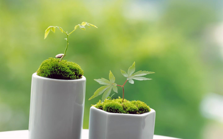 新芽嫩叶高清绿色植物壁纸 三